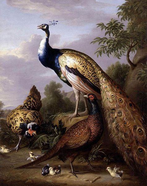 Pavo real, gallina y faisán gallo en un paisaje - Tobias Stranover